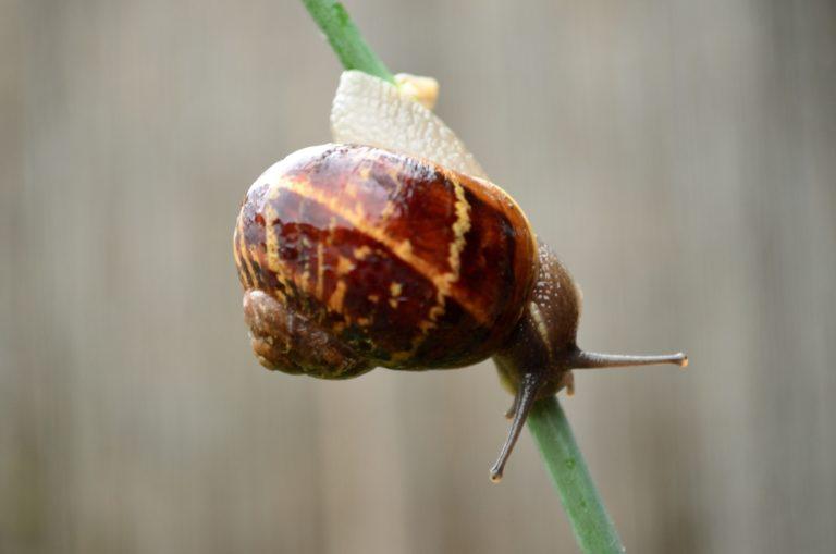 snail-mucin-benefits-for-skin
